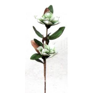 Květina Magnolie